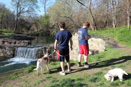 Boys and Dogs at the Dam