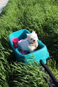12 year-old Lucy got the wagon ride