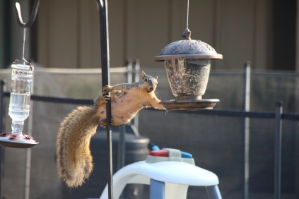 Squirrel! - 2