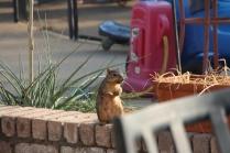 Squirrel! - 4
