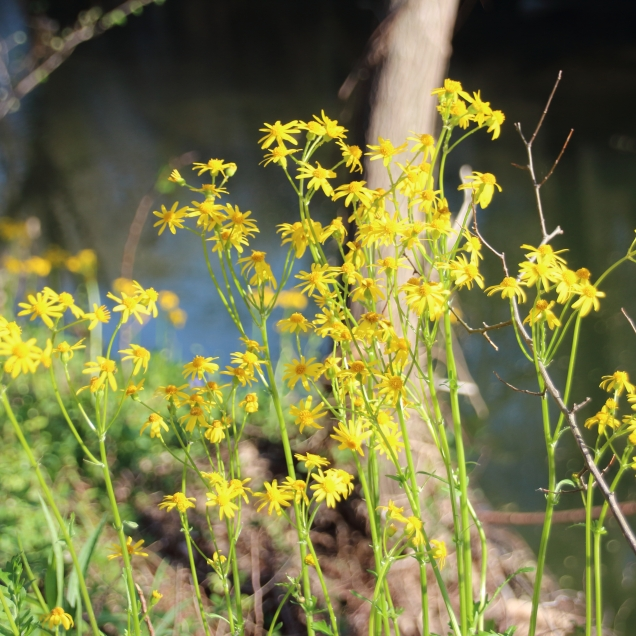 Allen Dam, flowers