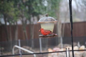 2018 Cardinal